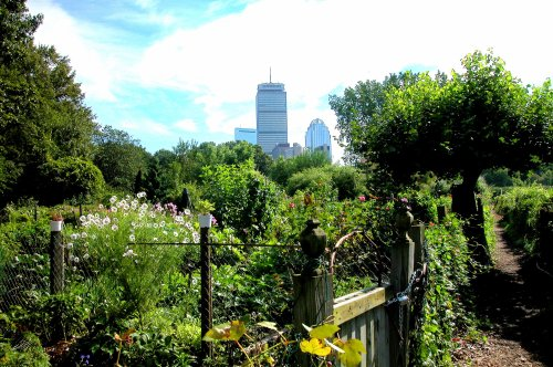 The Prudential Building towers over plots in the Fenway Victory Gardens in Boston along Boylston Street. These gardens are America\'s oldest Victory Gardens, established in 1942. Photo by Cathy Sherman. All rights reserved.