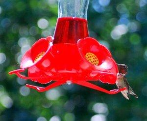 A rare moment of stillness at the feeder.