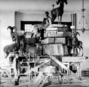 These workers from more than a hundred years ago take a break from building the Panorama of North American Animals and Plants, the largest diorama in the world, which is in the Museum of Natural History at KU.