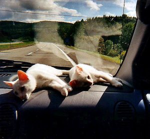 Paddington and Bones found a warm spot to enjoy the drive to Boston from Kansas City. Here they are somewhere in upstate New York.