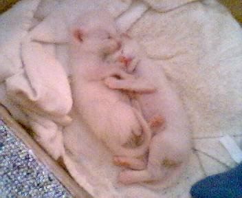 Newborn Bones and Paddington snuggle together. The brother's mother was rescued from a home of a cat hoarder.
