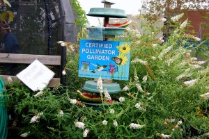 A Certified Pollination Garden at Monarch Watch's headquarters at KU shows visitors what kinds of plants attract pollinators.
