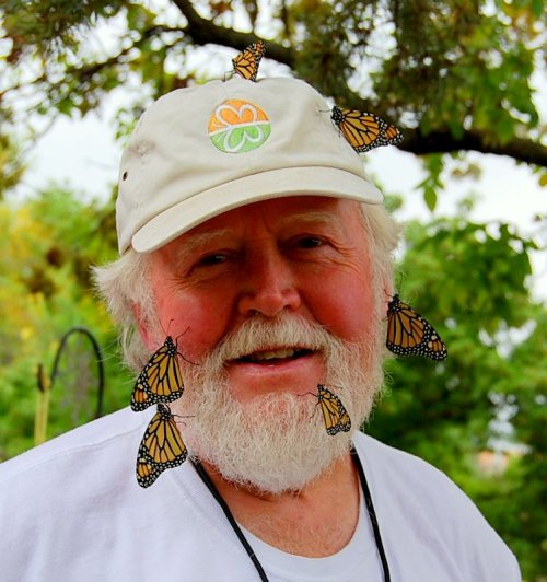 Newly hatched Monarch butterflies cling to Chip Taylor's hat and beard as they harden their wings.  Taylor is the founder of Monarch Watch.