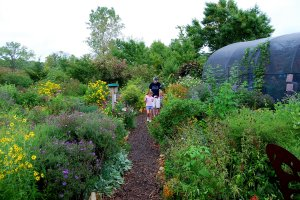 Visitors stroll through the Certified Pollinator Garden during the annual open house at the Monarch Watch Headquarters.