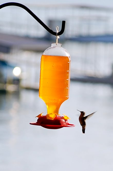 Soon after it was hung, hummingbirds appeared at this feeder at the Grand Lake of the Cherokee, Oklahoma, in mid-September.