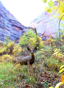 Mule deer were the most common animal that we saw in Utah. They were busy browsing day and night.