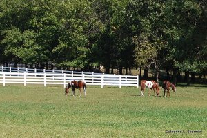 Horses on the ranch down the street from me.