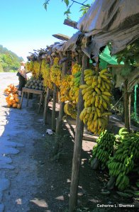 """Yes, we have bananas!""  We stop for fruit at a stand on the road to Lago de Yojoa."