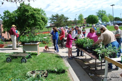 The Monarch Watch open house offered a wide range of annual and perennial nectar and food plants for butterflies and caterpillars.