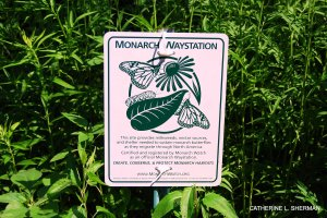 Monarch Butterfly Waystation.