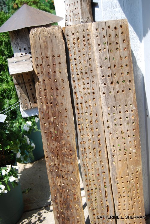 Old planks of untreated wood drilled with holes make great homes for leaf cutter bees.