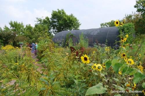 The pollination garden at Foley Hall, the home to Monarch Watch at the University of Kansas.