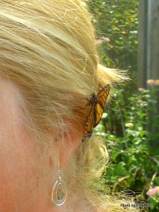 A Monarch butterfly is a beautiful hair ornament -- but just for a few minutes.