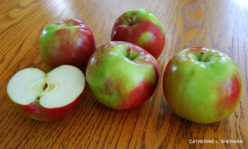 I love apples.  These McIntosh apples are my favorites.