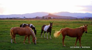 Horses graze in a pasture at sunset in St. George, Utah.