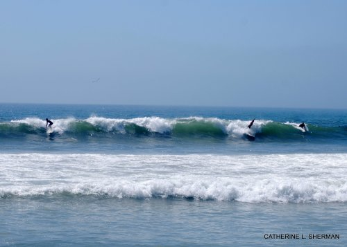 """Surfers ride the waves along the """"dog beach"""" in Huntington Beach.  This is a section of beach where dogs are allowed."""
