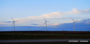 Dozens of windmills in western Kansas produce electricity. They stand in the flyway of migratory birds, such as the endangered whooping crane.
