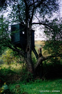 An ancient apple tree holds a tree house in its stout limbs, which no longer bear fruit.