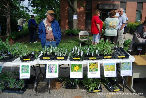 Many of the butterfly plants for sale at the Monarch Watch open house are native to northeast Kansas.