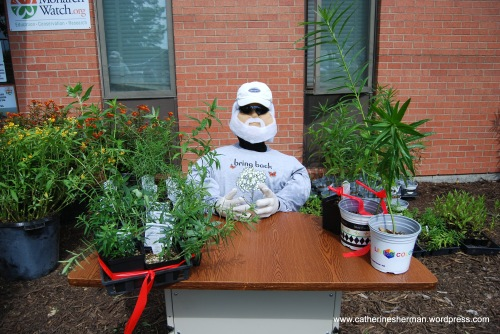 Chip Taylor's Doppelganger greets visitors at the 2012 Monarch Watch Spring Open House and Plant Sale. Dr. Taylor is the director and founder of Monarch Watch at the University of Kansas.