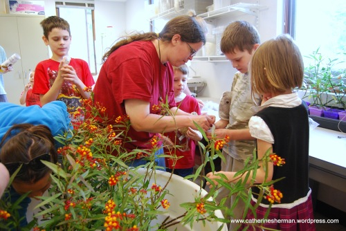 Children select their Monarch caterpillars, which they will take home with a milkweed they have purchased from the plant sale.