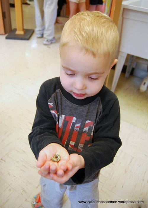 A boy proudly shows off his Monarch caterpillar, which he will take home with a milkweed plant to sustain it.