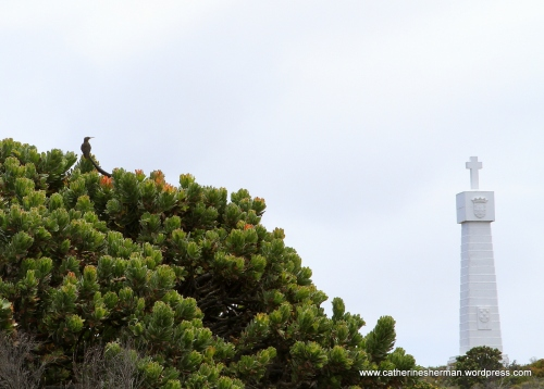 A Cape Sugarbird sits in a Protea bush near the Vasco Da Gama monument near the Cape of Good Hope in South Africa.