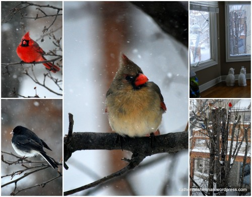 Whenever it snows, birds of all kinds flock to our bird feeder.  Most of the birds wait on the nearby trees for a spot on the feeder. Our two cats love the snow, because it's excellent bird-watching.  They seem to know that there's no chance of catching any birds, but they are vigilant anyway.
