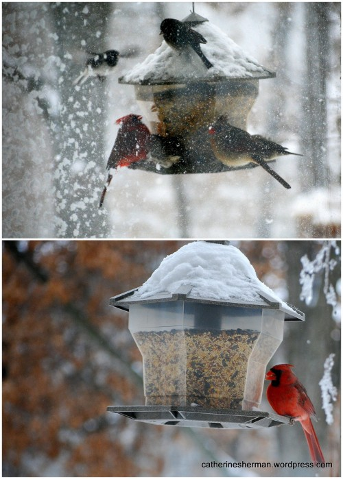 When the snow was falling hard, birds mobbed the feeder and filled the nearby trees as they waited their turn.  When the snow stopped, the traffic thinned out.  In the bottom photo, a cardinal leisurely eats his meal.