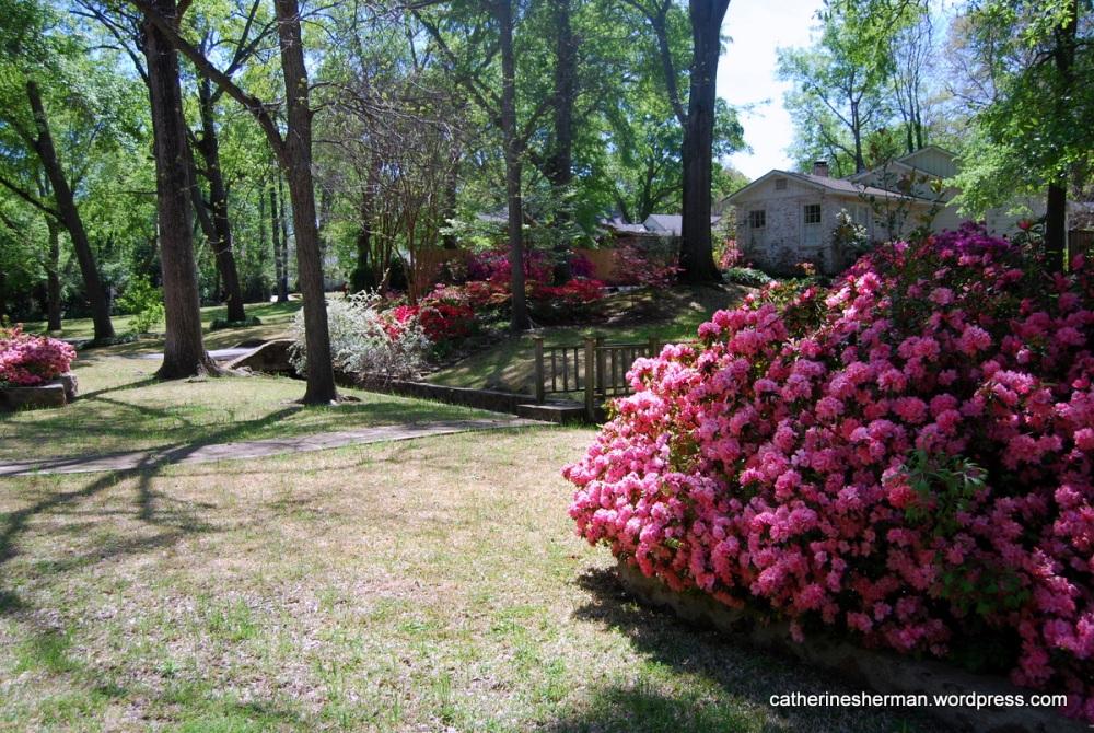The Azalea Trail in Tyler, Texas (6/6)