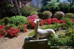 Dog Statue in Azalea Garden