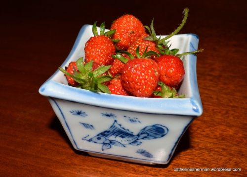 These are the first strawberries to ripen in my garden this year (2013).  This is more than two weeks later than usual.