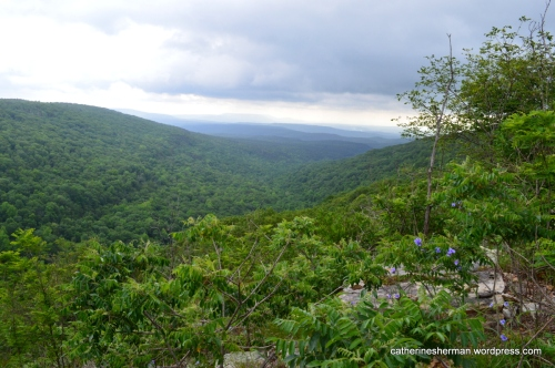 Here's a view from Bear Hollow Trail in Mount Magazine State Park in Arkansas.