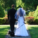 An English Cocker Spaniel walks down a garden path with her newlywed owners after their garden wedding near Ithaca, New York.