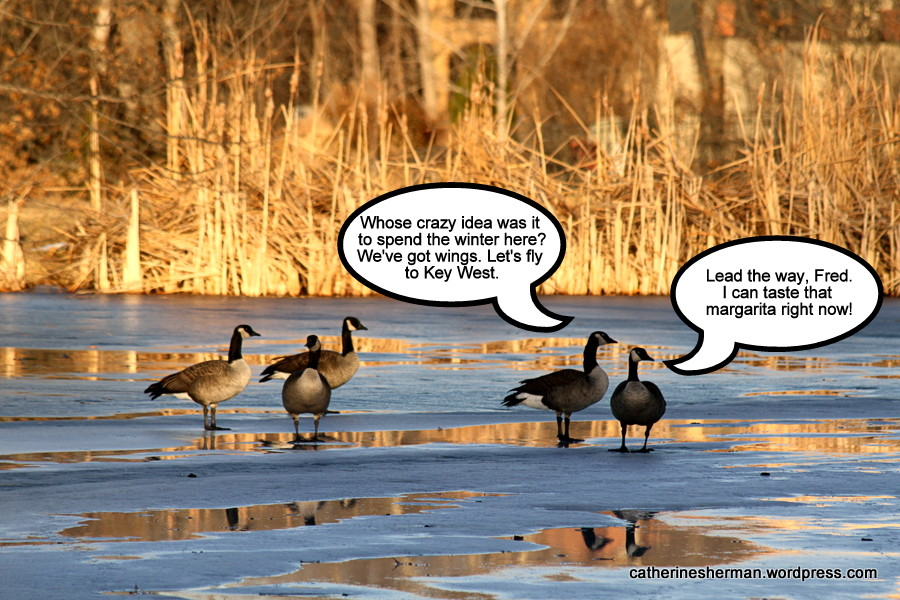 Don't Be a Silly Goose!  Fly South for the Winter! (1/2)