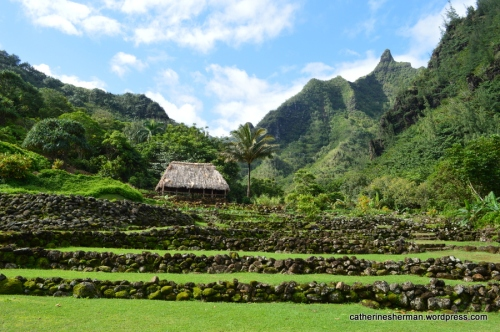 Terraced taro fields are in the Limahuli Garden and Preserve.  The rock walls you can see in the background are part of an important archeological site and are about 700 years old.