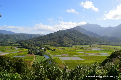 You can see the taro fields on either side of the Hanalei River.  This is also a wildlife refuge.