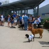 Bark at the Park Registration at Kauffman Stadium for the Kansas City Royals game against the Seattle Mariners on June 22, 2014.