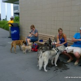 Dogs and their people relax at Bark at the Park during the game on June 22, 2014. The Kansas City Royals played the Seattle Mariners.
