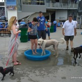 Dog and human cool off at Bark at the Park at Kauffman Stadium when the Kansas City Royals played the Seattle Mariners on June 22, 2014.