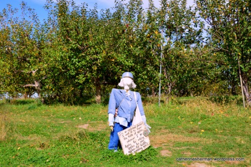 A scarecrow welcomes visitors to the apple orchard at Red Barn Farm.