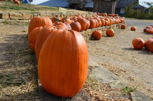 Choose a pumpkin at Red Barn Farm!