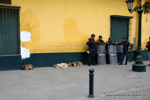 I think these are police dogs in Lima, Peru.  Here they are resting, but a few minutes later they were all awake and standing by the policemen.