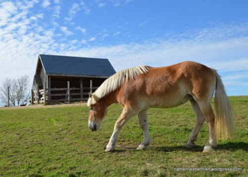 A beautiful palomino horse stands on a hill against a bright blue sky at Red Barn Farm.