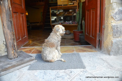 A dog sits in front of a shop in Ollantaytambo, Peru.