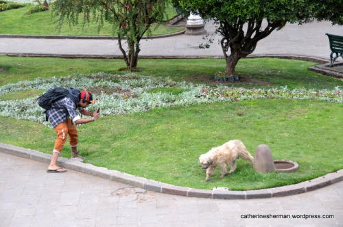 Here's another dog photographer, capturing this dog who has just gotten a drink at a dog watering fountain in Cusco, Peru.