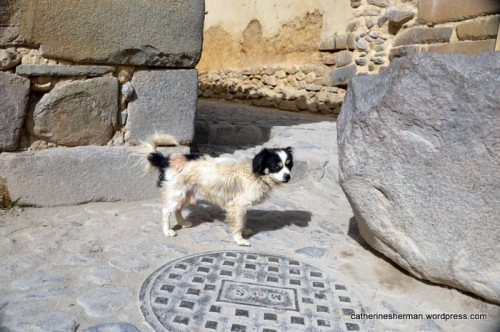 Look at this cutie pie on a street in Ollantaytambo, Peru.  You can see an example of the ancient Inca stonework in this town, where an Inca emperor had an estate.