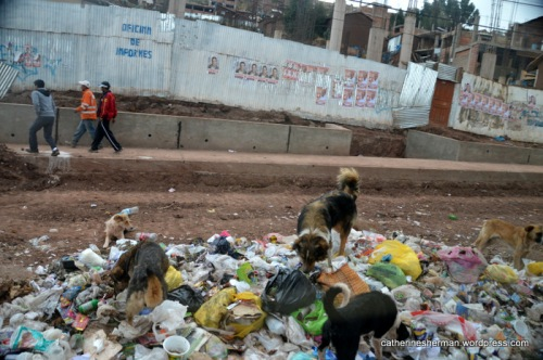 Dogs dig in trash bags along a highway near Cusco, Peru.