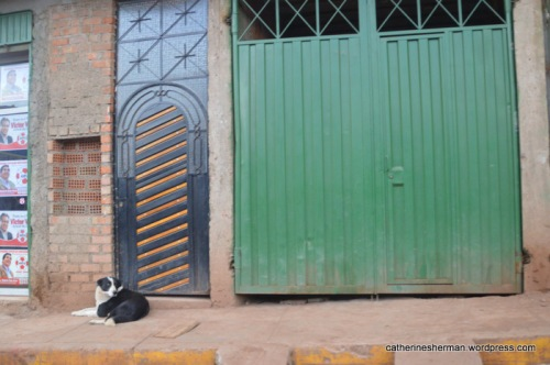 A dog in Cusco, Peru.