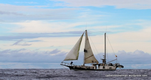 """A tattered Jolly Roger flag blows in the wind on a """"pirate"""" ship call """"Pirata"""" off the Coast of Santa Cruz Island in the Galapagos Islands of Ecuador."""